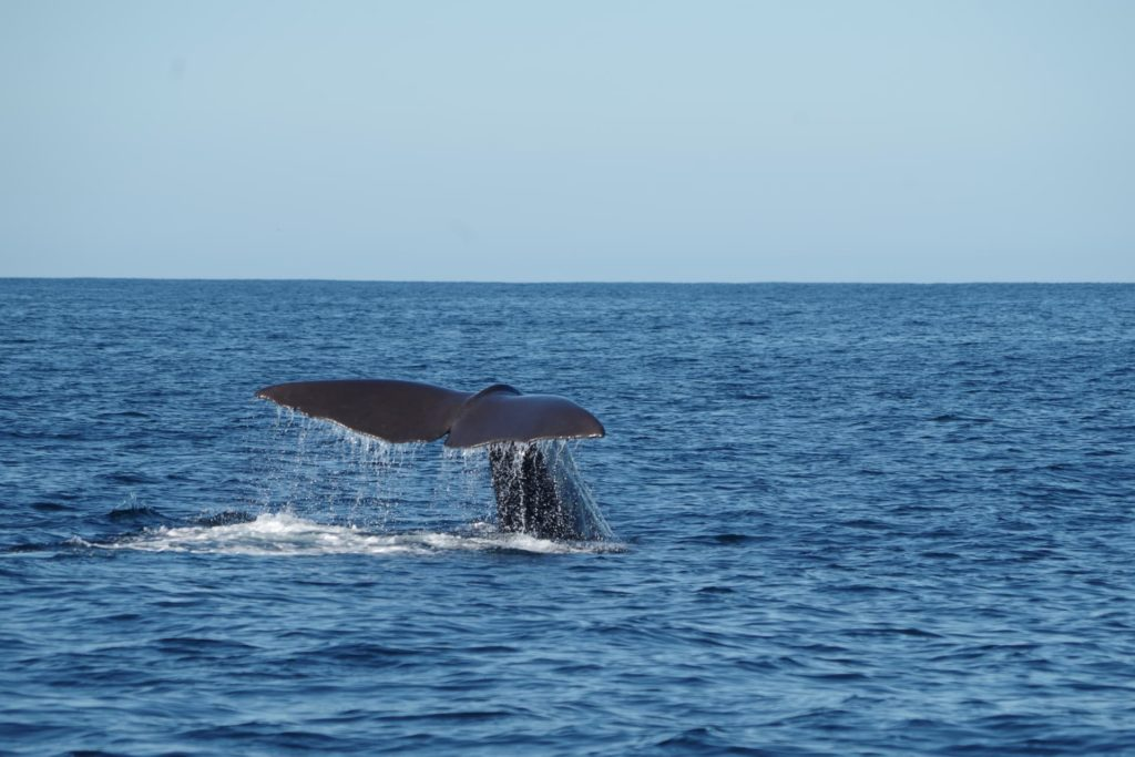 Marine wildlife watching in Lanzarote